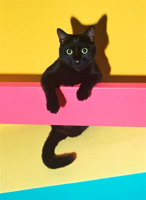 Colors Cat 17 best images about black cat on