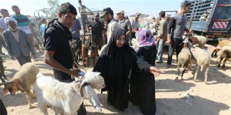 bukalapak hewan qurban kambing hingga unta untuk kurban tersedia di toko online