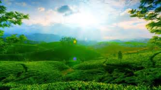 beautiful green landscape wallpaper allwallpaper in