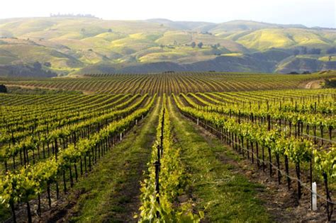 best wines california 10 best california wineries with a view