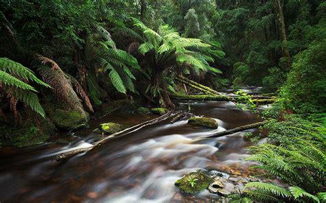 nelson river tasmania australia jungle thick green