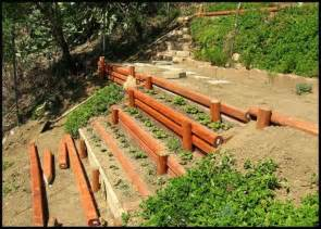 veggie garden to replace slope ground cover