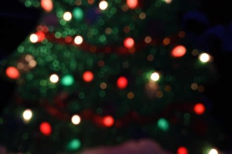 christmas tree shaped bokeh free stock photo public