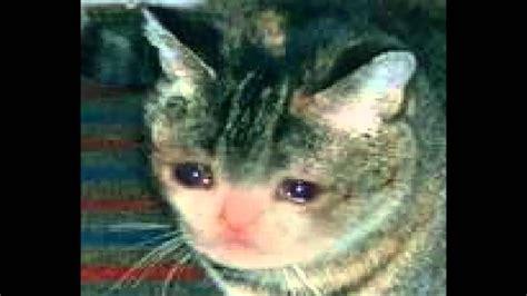 Crying Cat Meme - crying cat meme 08 greetyhunt