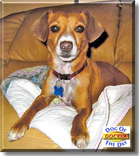 docker puppies docker june 8 2004