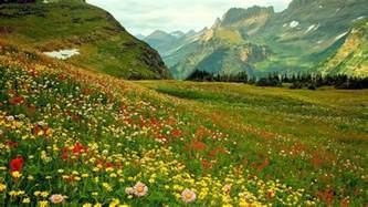 Landscape Definition Tagalog Alpine Flowers Hd Desktop Wallpaper Widescreen