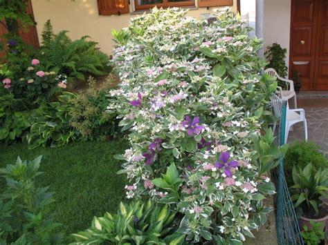 piante da ombra per giardino 1000 idee su piante da ombra da giardino su