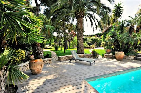 palm tree backyard palm trees bring the tropics to your home palmates