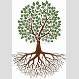 Family Tree Roots Background | 342 x 501 jpeg 130kB
