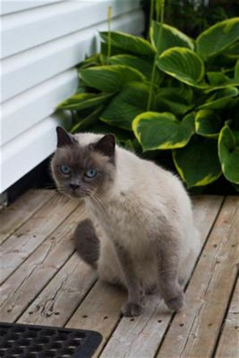 living in the gutter with the siamese living in the gutter