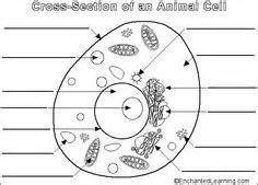Animal cell labeled black and white cell unit animal on pinterest