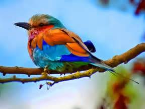 colorful bird pictures colorful bird photography colorful birds photo 4 birds