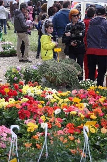 mostra dei fiori firenze foto la mostra dei fiori 7 di 16 firenze repubblica it
