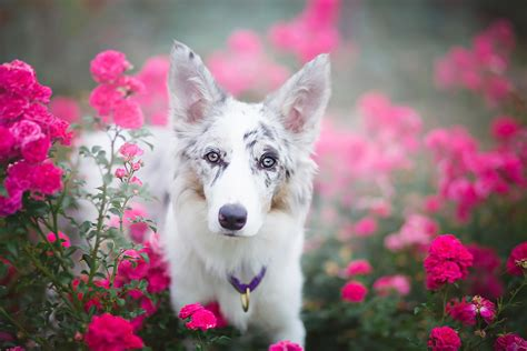puppies and flowers puppies and flowers wallpapers 63 images