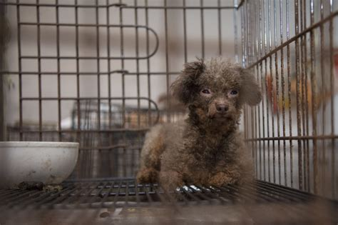 puppy mills in nc rolling crushes puppy mill trade 183 a humane nation