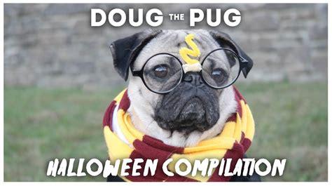 tv show compilation doug the pug doug the pug compilation funnydog tv