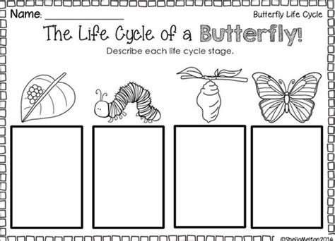Butterfly Cycle Worksheet by Cycle Of Butterfly Worksheet Worksheets