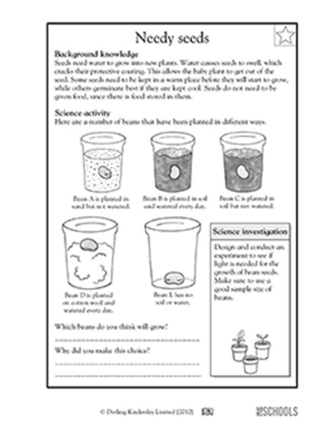 Science Worksheets For 4th Grade by 3rd Grade 4th Grade Science Worksheets Needy Seeds
