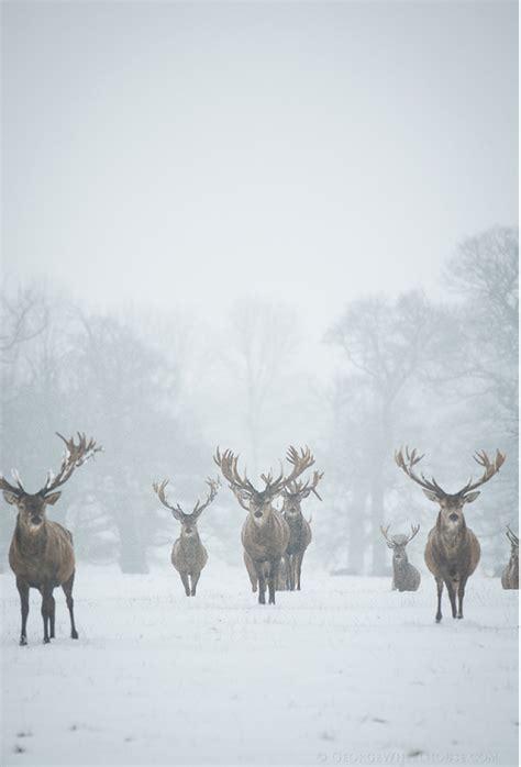 herten in de sneeuw winter herten sneeuw - Möbel Herten