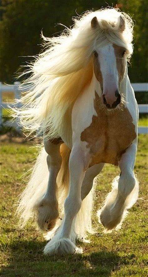 nice hourse very nice horse photo thanks to original uploader for