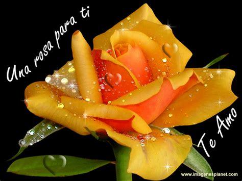 imagenes con rosas y frases bonitas im 225 genes de rosas bonitas con frases de amor im 225 genes de