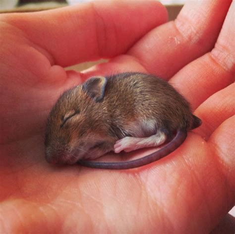 89 Cutest Animals That Fit in the Palm of Your Hand ? Wow