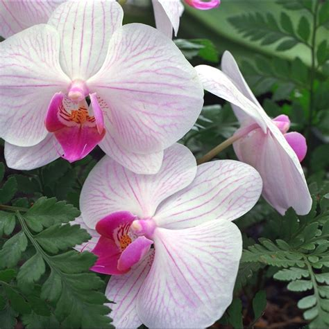 best flowers in the world flowers from hawaii best flowers in the world flowers of hawaii