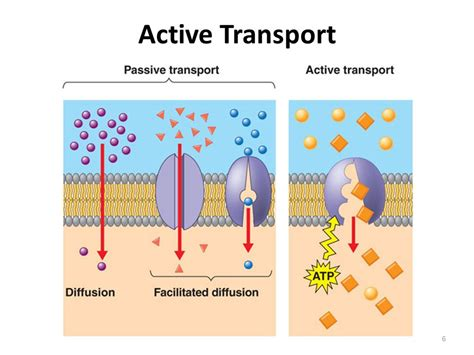 protein transport active transport protein pumps and endocytosis ppt