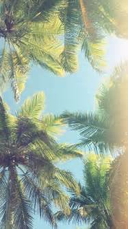 Palm Tree Wallpaper 25 Best Ideas About Phone Wallpapers On Phone