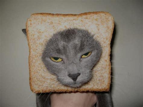 Cat Toast Meme - toast cat funny pinterest