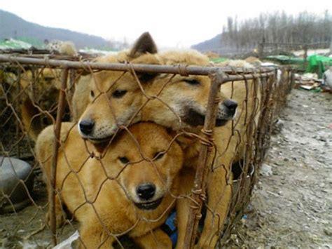 puppy in korean farm in south korea photo