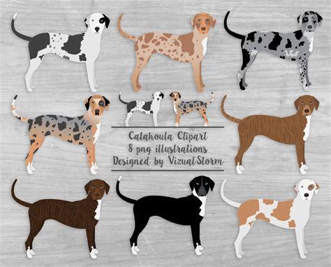 Patchwork Catahoula - catahoula clipart louisiana catahoula leopard dogs