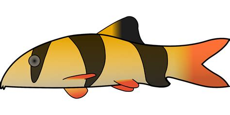 farben waage clown fisch streifen 183 kostenlose vektorgrafik auf pixabay