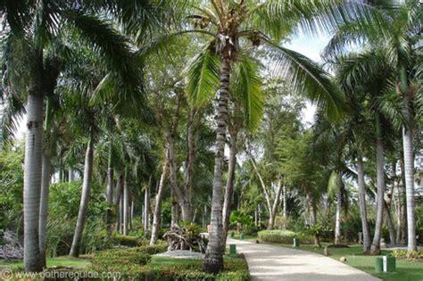 paradisus punta cana gardens picture paradisus punta cana