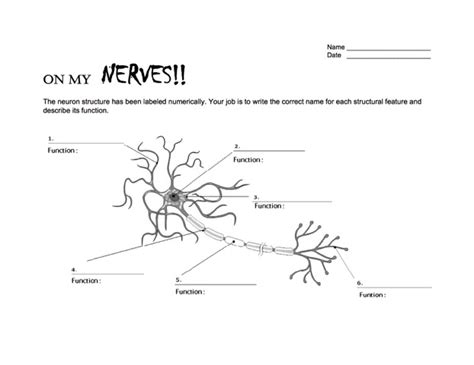 Neuron Worksheet by Neurons On Day Two Skyview Nw Noggin Neuroscience