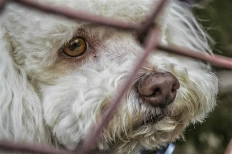 whats a puppy mill how to avoid buying from a puppy mill golden woofs