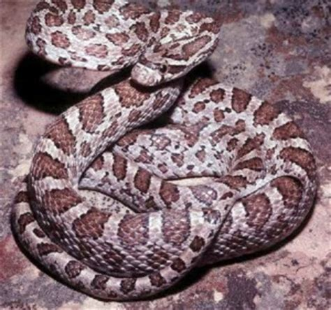 Garter Snake Venom Effects Illinois Poison Center 187 Archive 187 Out For