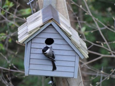 chickadee house plans pin chickadee bird house plans houses on pinterest