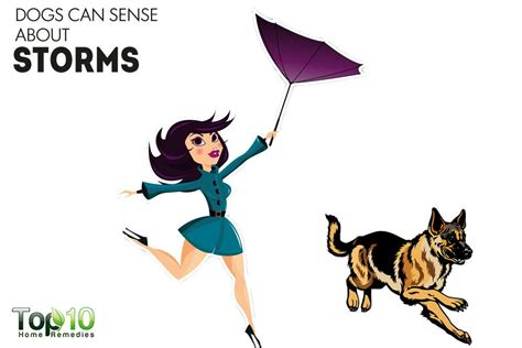 can dogs sense 10 things your can sense about you top 10 home remedies
