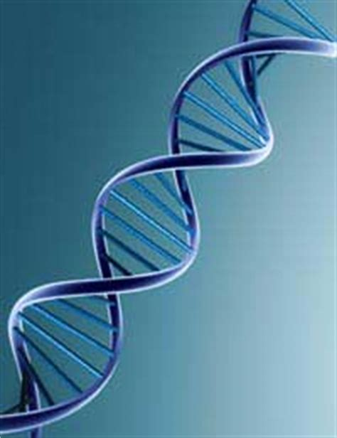 blueprint genetics an overview of dna functions