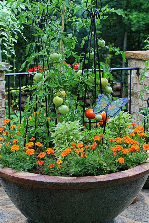 container gardening tomatoes the graceful gardener 187 tomato