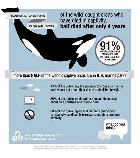 how to survive an active killer an honest look at your in the age of mass violence books infographic for orcas in captivity animal welfare institute
