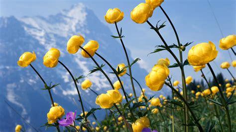 wallpaper flower full size 25 free hd flowers wallpapers