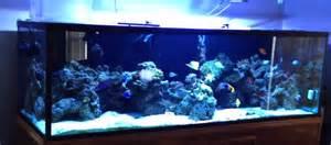 types of aquariums types of saltwater aquariums mad hatter s reef