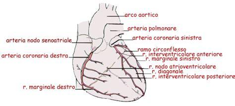vasi coronarici circolazione coronarica