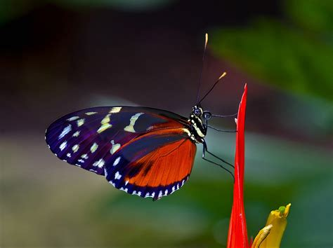 imagenes mariposas exoticas september 2012 september 2012 banco de imagenes gratuitas