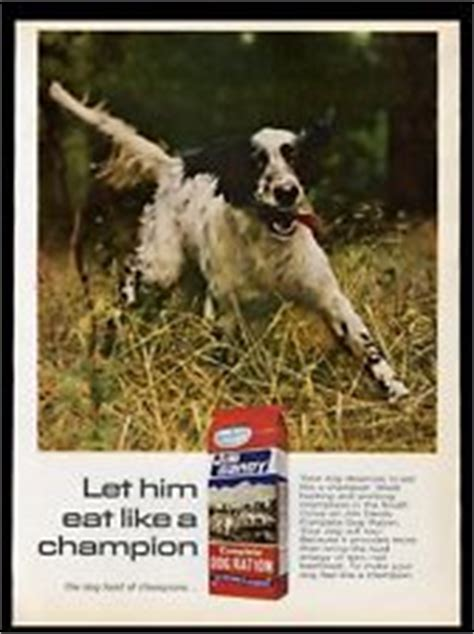 english setter dog food english setter print ebay