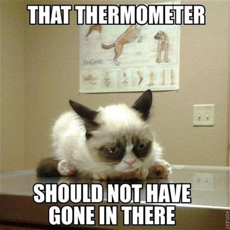 Unamused Cat Meme - funny cats 1 dump a day