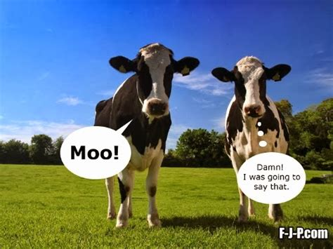 Moo Meme - two cows funny joke pictures