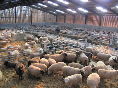 my housing sheep housing design 28 images sheep housing lambing polytunnel northern